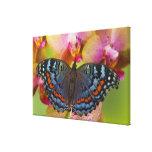 Mariposa tropical 4 de Sammamish Washington Impresiones En Lona