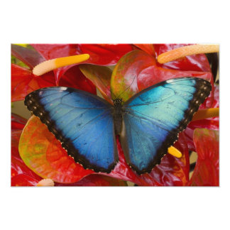 Mariposa tropical 4 de Sammamish Washington Impresión Fotográfica