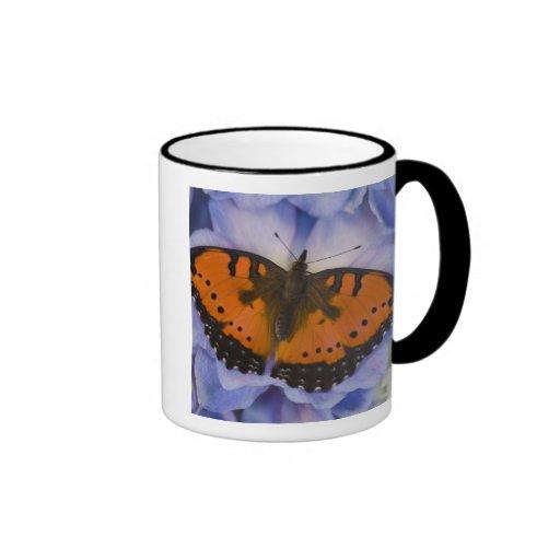 Mariposa tropical 4 de Sammamish Washington Tazas De Café
