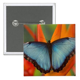 Mariposa tropical 5 de Sammamish Washington Pin Cuadrada 5 Cm