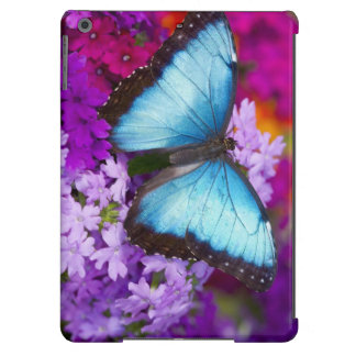 Mariposa tropical 7 de Sammamish Washington