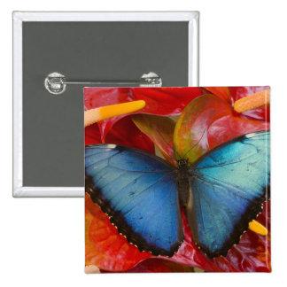 Mariposa tropical 8 de Sammamish Washington Pin Cuadrada 5 Cm