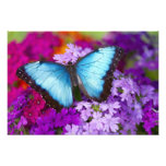 Mariposa tropical 9 de Sammamish Washington Impresión Fotográfica
