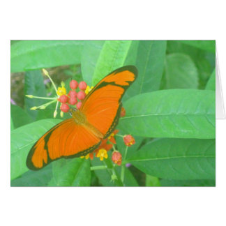 Mariposa tropical anaranjada de Julia Felicitacion