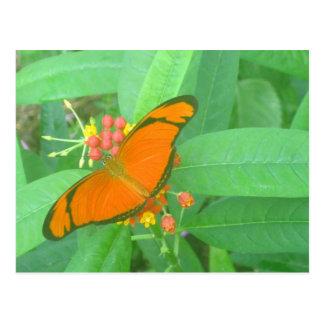 Mariposa tropical anaranjada de Julia Tarjeta Postal