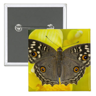 Mariposa tropical de Sammamish Washington Pin Cuadrada 5 Cm