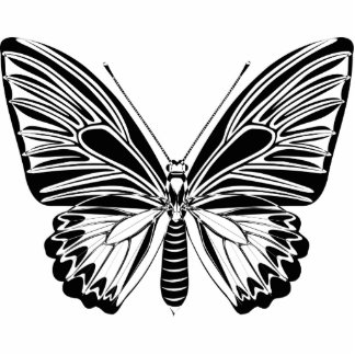 Mariposa tropical escultura fotografica