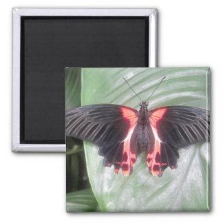 Mariposa tropical imanes