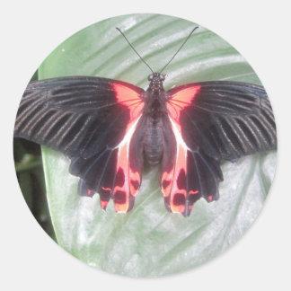 Mariposa tropical pegatina redonda