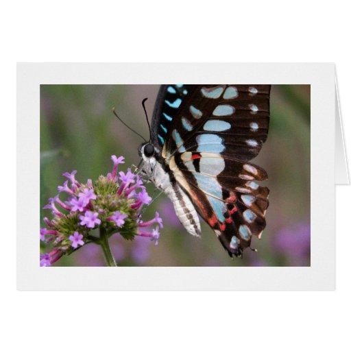 Mariposa tropical tarjeta pequeña