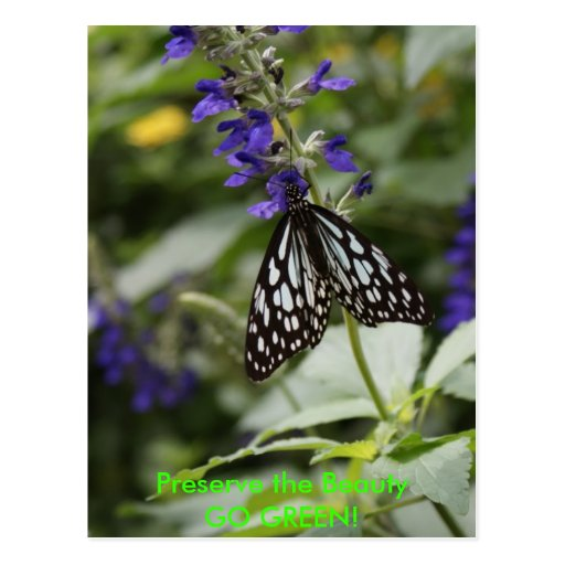 ¡Mariposa - VA el VERDE! Tarjeta Postal