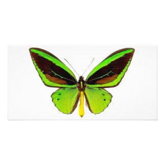 Mariposa verde clara tarjeta fotográfica