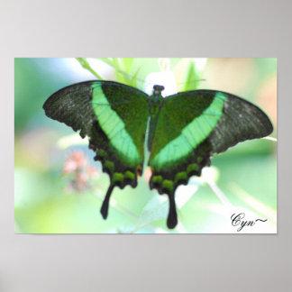 Mariposa verde, Cyn~ Posters