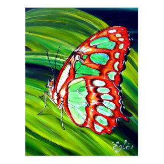 Mariposa verde de la malaquita tarjetas postales