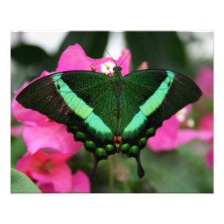 mariposa verde fotografía