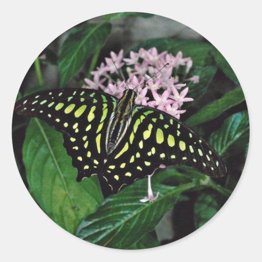 mariposa Verde-manchada del triángulo, flor de Mal Pegatinas