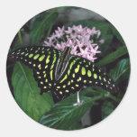mariposa Verde-manchada del triángulo, Malasia Etiqueta