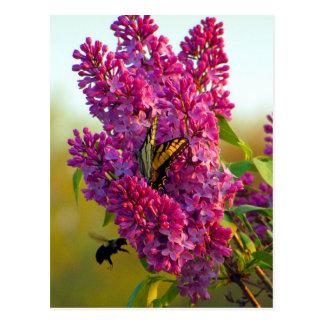 Mariposa y abeja en la postal de la lila