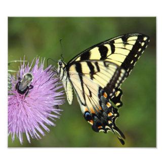 Mariposa y abeja fotografía