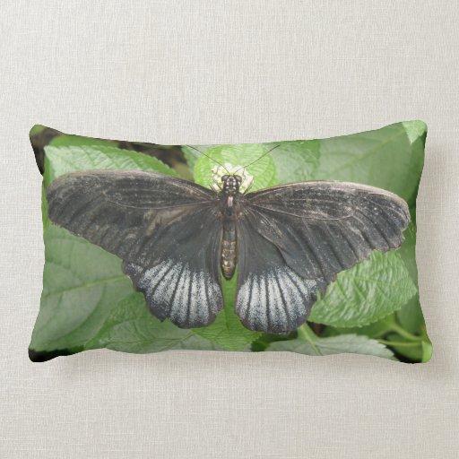 Mariposa y almohada tropicales bonitas de las flor