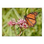 Mariposa y amigo de monarca felicitacion