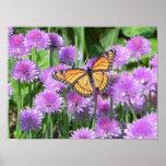 mariposa y cebolletas impresiones