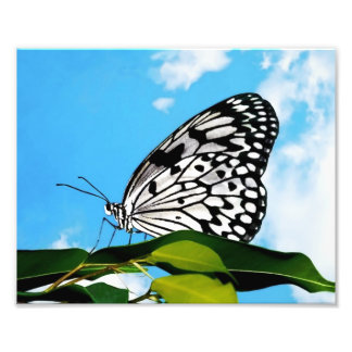 Mariposa y cielo impresión fotográfica