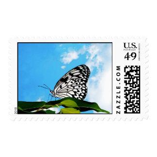 Mariposa y cielo envio
