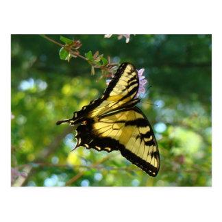 Mariposa y cielo postal