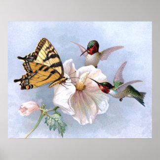 Mariposa y colibríes póster