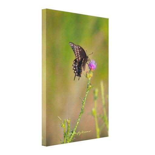 Mariposa y escena escocesa del jardín del cardo impresiones de lienzo