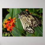 Mariposa y estampado de flores poster