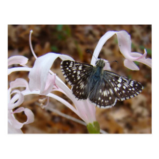 Mariposa y flor del baile tarjeta postal