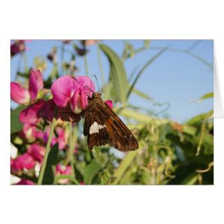 Mariposa y flores de Sweetpea Tarjeta De Felicitación