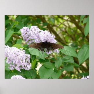 Mariposa y lila Bush de Swallowtail Póster