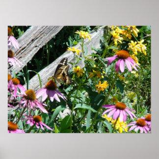 Mariposa y margaritas negras y amarillas posters