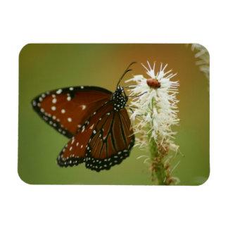 Mariposa y mariquita imán rectangular