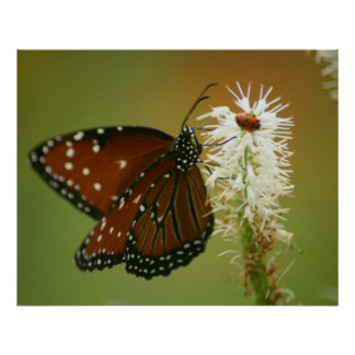 Mariposa y mariquita posters