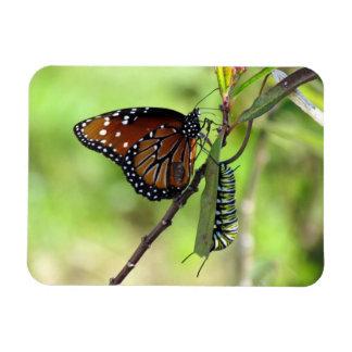 Mariposa y monarca Caterpillar de la reina Iman Flexible