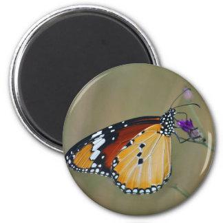 Mariposa y néctar hermosos de los lifes imán para frigorífico
