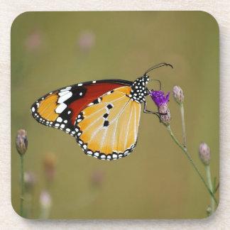 Mariposa y néctar hermosos de los lifes posavasos de bebidas