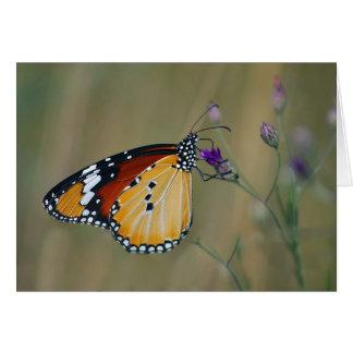 Mariposa y néctar hermosos de los lifes tarjetón