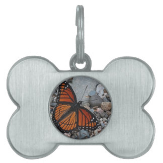 Mariposa y piedras placas mascota
