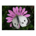 Mariposa y postal rosada de la flor