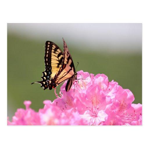 Mariposa y rododendros tarjeta postal