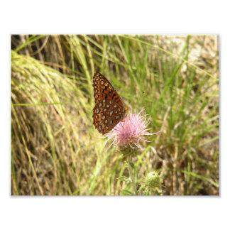 Mariposa y Wildflower de la foto del arte de la Cojinete