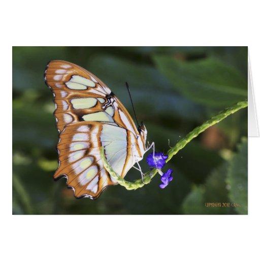 Mariposas 483 tarjeton