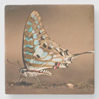 Mariposas agua potable, primer, Punda Posavasos De Piedra