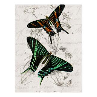 Mariposas anaranjadas verdes de Swallowtail de los Postal