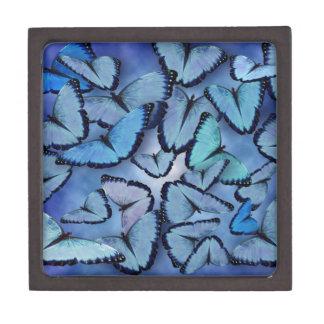Mariposas azules de Morpho Caja De Regalo De Calidad